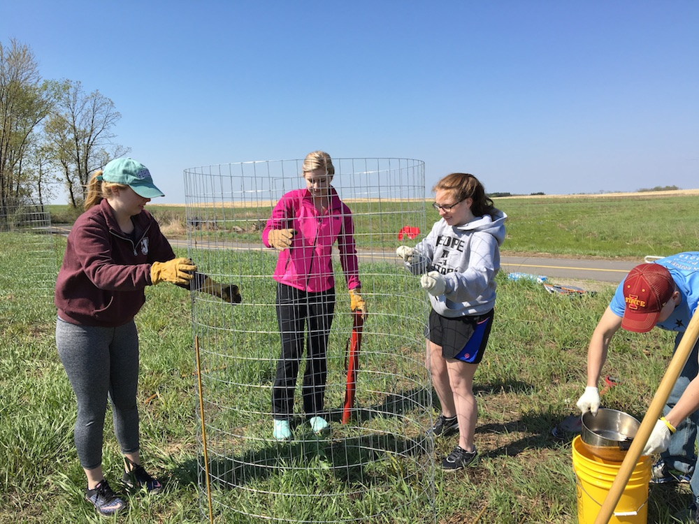 Students planting protective cages, Orland Grassland – 5/6/2016 © Pat Hayes